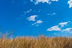 Campo de uma grama de encontro ao céu azul Imagens de Stock Royalty Free