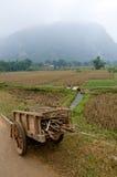 Campo de Vietnames Imagenes de archivo