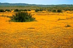 Campo de wildflowers amarillos Imagenes de archivo
