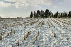 Campo debajo de la nieve. Imágenes de archivo libres de regalías