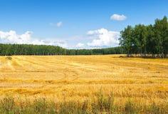 Campo degli agricoltori Fotografia Stock Libera da Diritti