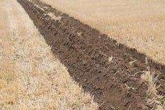Campo degli agricoltori Fotografie Stock