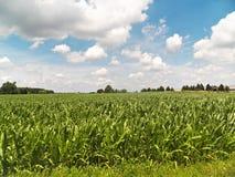 Campo degli agricoltori Fotografia Stock