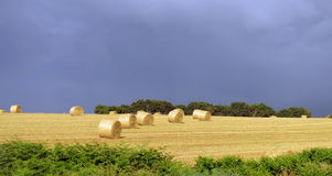 Campo degli agricoltori con le balle di fieno Fotografie Stock Libere da Diritti