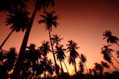 Campo degli alberi di noce di cocco, Tailandia del sud fotografia stock libera da diritti