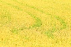 Campo dei cereali crop Affare agrario dell'agricoltore Immagine Stock