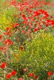 Campo dei fiori immagine stock