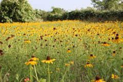 Campo dei fiori Immagini Stock