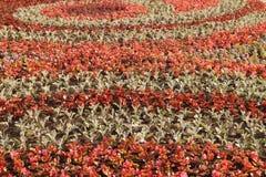 Campo dei fiori in aiola Immagini Stock