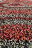 Campo dei fiori in aiola Fotografie Stock