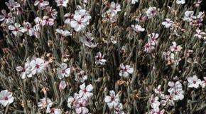 Campo dei fiori bianchi con i gambi immagine stock libera da diritti