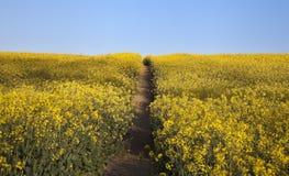 Campo dei fiori con il percorso Fotografia Stock
