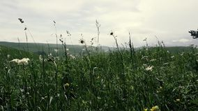 Campo dei fiori di estate video d archivio