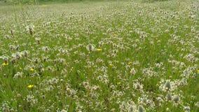 Campo dei fiori in primavera immagini stock