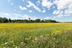 Campo dei fiori rossi e gialli fotografie stock libere da diritti