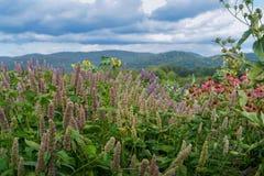 Campo dei fiori selvaggi Fotografia Stock Libera da Diritti