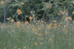 Campo dei fiori selvaggi fotografia stock