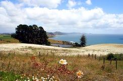 Campo dei fiori, Tasmania, Australia Fotografia Stock Libera da Diritti