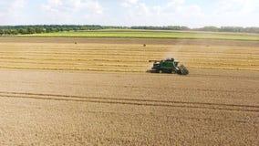 Campo dei girasoli e del grano Una mietitrice riunisce i grani del grano archivi video
