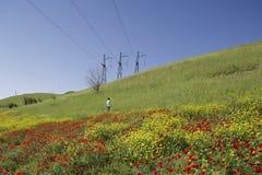 Campo dei papaveri in Kirgizstan Fotografia Stock