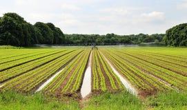 Campo dei raccolti crescenti che sono irrigati Fotografie Stock Libere da Diritti