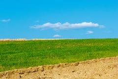 Campo dei raccolti del terreno coltivabile e di bello cielo blu qui sopra immagine stock