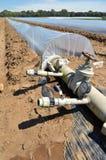 Campo dei raccolti di verdure nelle file coperte di protezione delle campane di vetro del politene Immagine Stock Libera da Diritti
