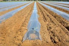 Campo dei raccolti di verdure nelle file coperte di protezione delle campane di vetro del politene Fotografia Stock Libera da Diritti