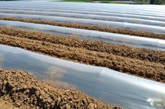 Campo dei raccolti di verdure nelle file coperte di protezione delle campane di vetro del politene Fotografie Stock Libere da Diritti