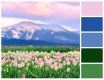 Campo dei tulipani con i campioni di colore della tavolozza Immagini Stock