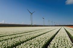 Campo dei tulipani e delle turbine di vento bianchi immagini stock