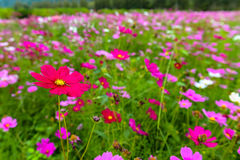 Campo dei wildflowers Fotografia Stock