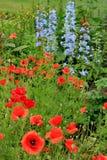 Campo dei Wildflowers Immagine Stock Libera da Diritti