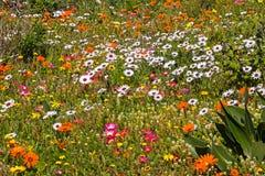 Campo dei wildflowers allegri Fotografia Stock