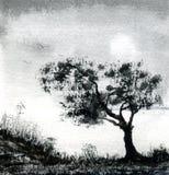 Campo del árbol Fotografía de archivo