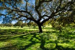 Campo del árbol de corcho con las flores salvajes Imagenes de archivo