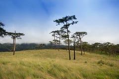Campo del árbol de pino en la montaña en PHU SOI DAO Fotos de archivo libres de regalías