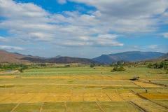 Campo del ajo con la choza Imagen de archivo