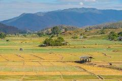 Campo del ajo con la choza Foto de archivo libre de regalías
