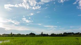 Campo del arroz con el cielo hermoso almacen de video