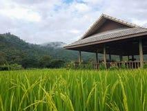 Campo del arroz con el fondo de la montaña Imagenes de archivo
