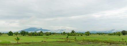Campo del arroz con el fondo escénico Foto de archivo libre de regalías