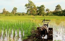 Campo del arroz con el tracter Imagenes de archivo