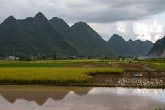 Campo del arroz de Bac Son Fotos de archivo