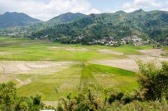 Campo del arroz de la araña de Cancar Fotografía de archivo libre de regalías