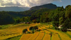 Campo del arroz de los pasos Imagen de archivo libre de regalías