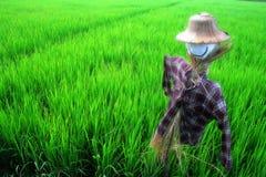 Campo del arroz del espantapájaros Foto de archivo libre de regalías