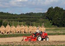 Campo del arroz del otoño Fotografía de archivo