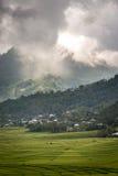 Campo del arroz del web de araña en Ruteng Fotos de archivo libres de regalías