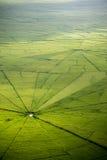 Campo del arroz del web de araña en Ruteng Fotografía de archivo libre de regalías